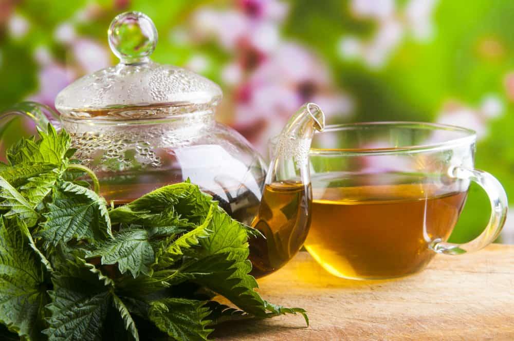 herbata z liśćmi pokrzywy