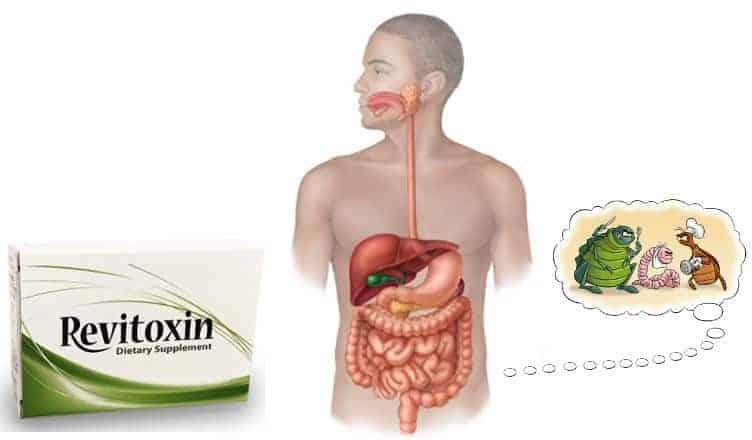 Revitoxin – opinia na temat suplementu przeciwko pasożytom