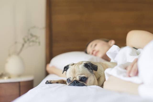 pies śpiący na łóżku