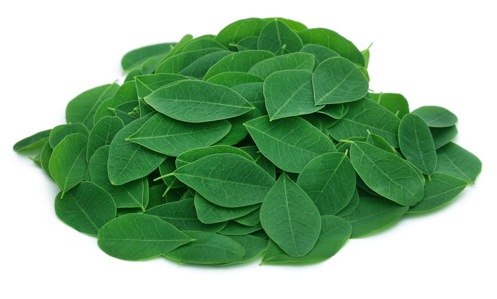 liście moringa