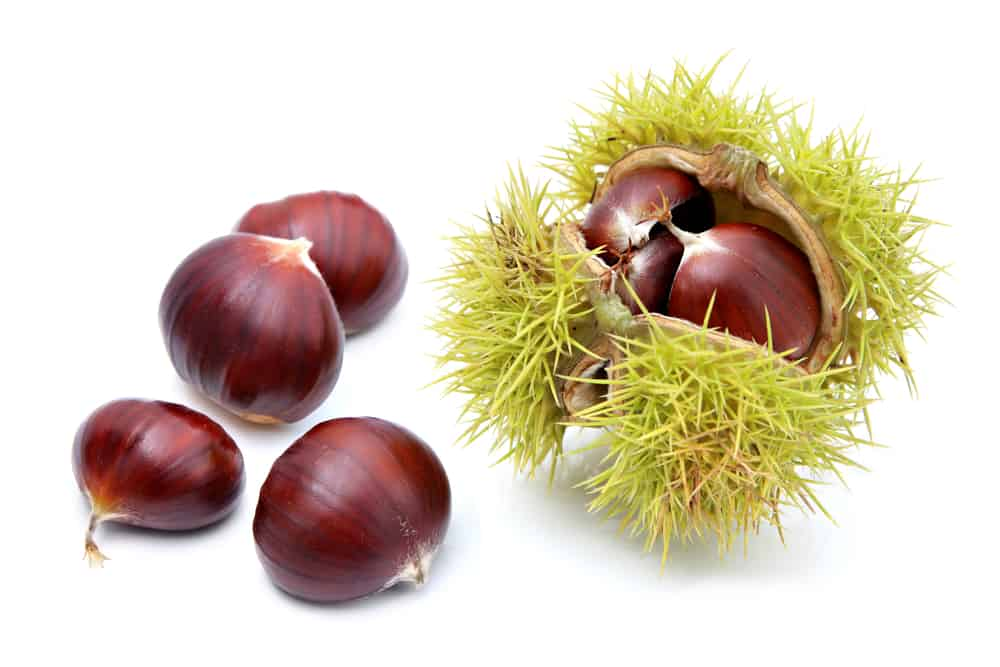 owoce kasztanowca zwyczajnego